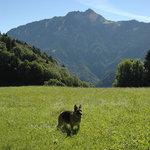 صورة فوتوغرافية لـ كاستل كلاب ليسين بارك ريزورت