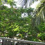 Balcony view with fire tree