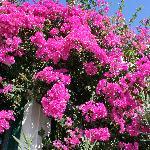 Costa Marina Villas Foto
