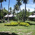 Island Bures