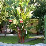 our Costa Rican Christmas Tree