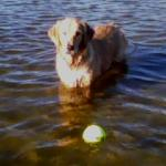 She loves to play fetch in the water or on land!