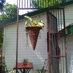 Hanging basket in the garden