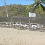 Turtle Hatching Sanctuary on Resort Property