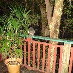 Nightly visitors - possums
