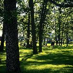 Bate Island Park