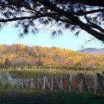 The Vineyward