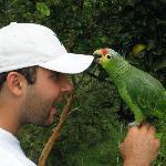 Bonita the parrot.