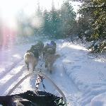 dogsled ride
