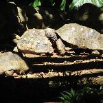 Turtles in Parc des Mamelles