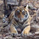 a tiger cub we saw!