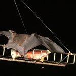 Bat having Dinner
