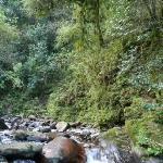 Foto de Selva Montana
