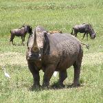 one of the Rhinos