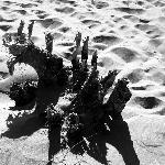 Sand and Gnarled Wood