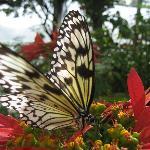 schmetterling im butterflyword