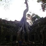 Foto di Queen Villa Angkor