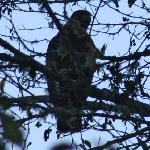 Eagle at Kamp Klamath