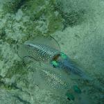 close up squid