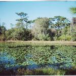Wetlands area of Florida Botanical Gardens
