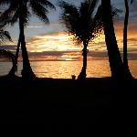 Sunset with the palm trees