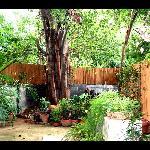 The garden