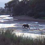 ielephants on the river, samburu