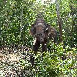 Elephants, Kerala India