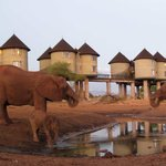 Photo de Sarova Salt Lick Game Lodge