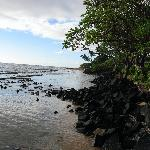 View of beach in front of Kapaa Shores