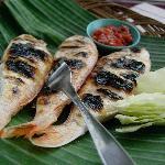 terisi fish