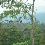 A toucan in tree as seen from our porch