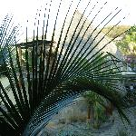 Le palme di Punta Placer