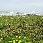 Cape St. Francis2