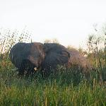 Bull Elephant up close and personal