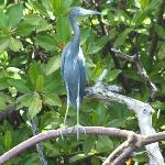 heron day time biobay