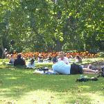 Concert in Parks
