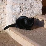 La Micia nera