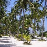 Kura kura resort