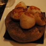 Scallops on a rock