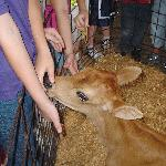 Jersey Calf at Chaney's