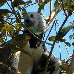 Hiking near Embera Village with Garceth Cunampio: Harpy Eagle!