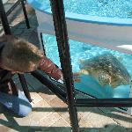 checking out the turtle up close..