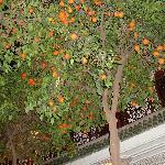 innenhof mit orangenbäumen