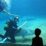 Aquarium Durban, Requin