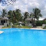 swimming pool from palapa bar