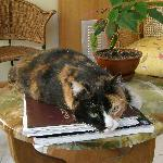 Clementina the calico cat