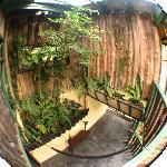Arboretum type area between two levels