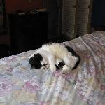Carmela, the house cat, loved our bed!