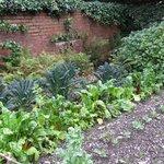 Vegetable garden - still kept up